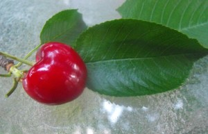 picture perfect cherry